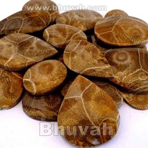 morocco fossil coral