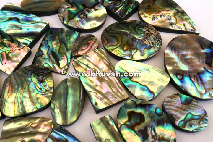 Abalone Shell Price Per Kilogram