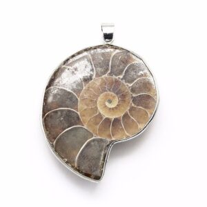 Ammonite Pendant Price