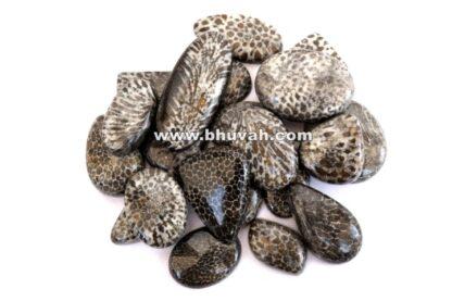 Black Fossil Coral Price Per Kg