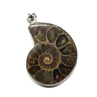 Natural Ammonite Fossil Pendant Price