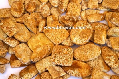 Fossil Coral Stone Price Per Kg