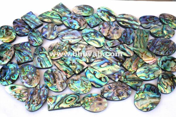 Paua Abalone Shell Price Per Kg