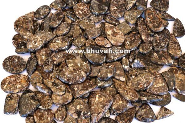 Turritella Stone Price Per Kilo
