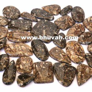 turritella stone price per kg