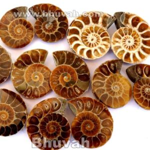 ammonite fossil gemstone stone 10 pieces price