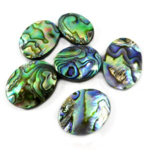 paua abalone shell stone cabochon gemstone 20 pieces price