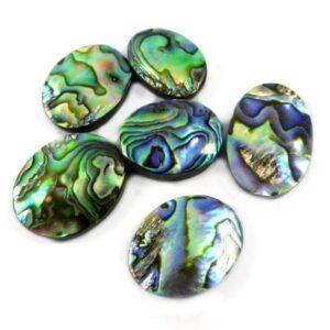 paua abalone shell stone cabochon gemstone 20 pieces price