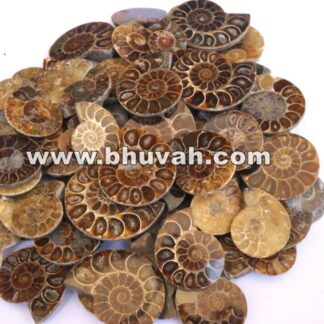 Ammonite Fossil Price Per Kilo