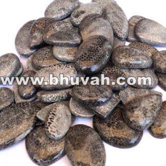 Black Fossil Coral Price Per Kilo