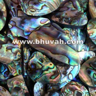 Paua Abalone Shell Price Per Kilo