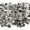 Black Fossil Coral Price Per Kilogram